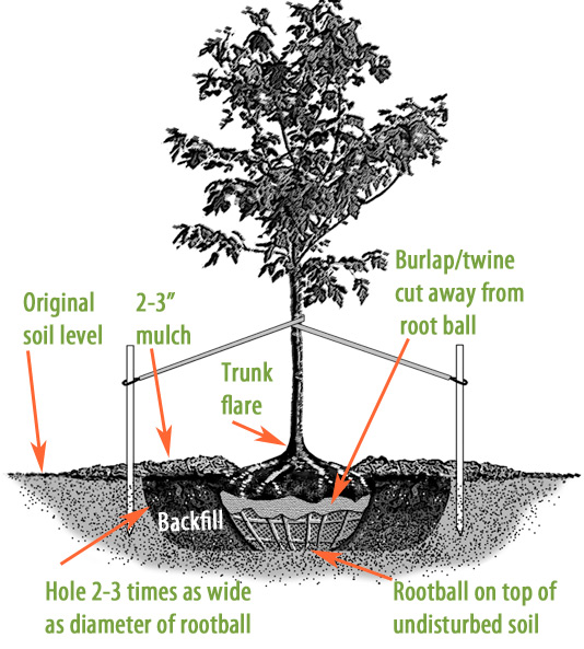 8741-tree-diagram