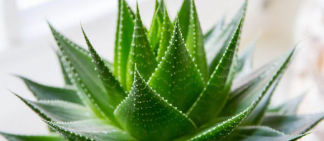 Anxious to dig in the dirt? Start with these 5 indoor plants!