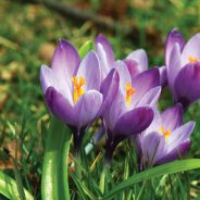 Fall Bulb Planting Guide – Get Ready for Spring Now!