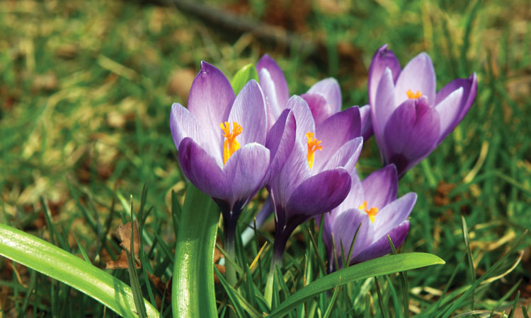 Fall bulb planting guide get ready for spring now magnolia mightylinksfo
