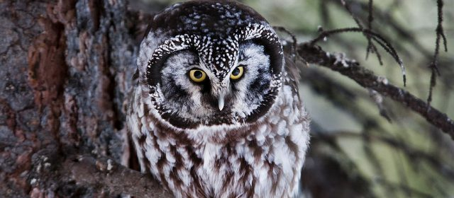Tips for Enjoying Wildlife this Winter