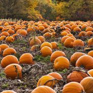 Fall is here! Time for pumpkins, apple orchards, and yard cleanup!
