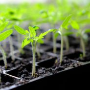 Think Spring! Start planting indoor seeds soon