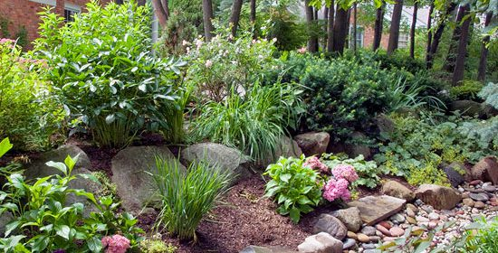 What is a Rain Garden? And Why are they Important?