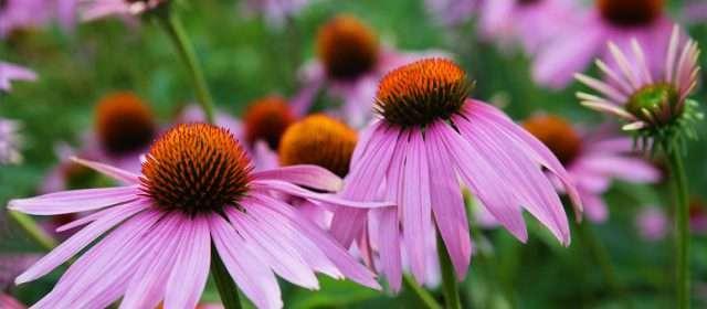 November Planting & Clean-Up Tips