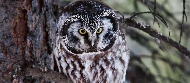 Tips for Enjoying Wildlife this Winter