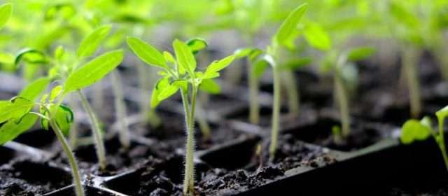 Think Spring! Start planting indoor seeds soon
