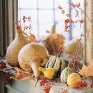 'Tis the Season for…Gourds?