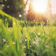 Spring Lawn Care In Minneapolis