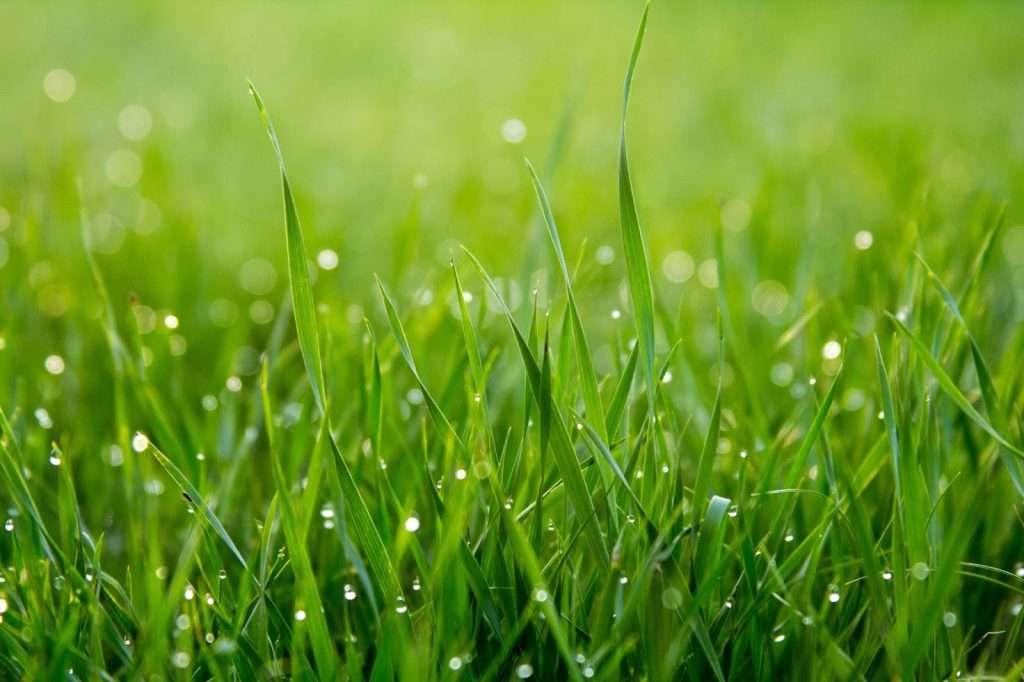 landscaping Minneapolis grass summer heat
